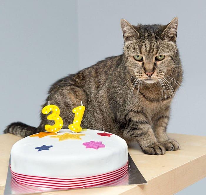 Серая кошка-долгожительница