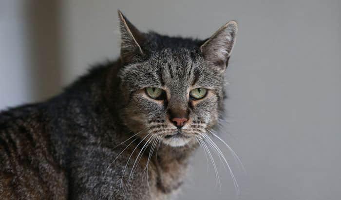 Кошке 31 год