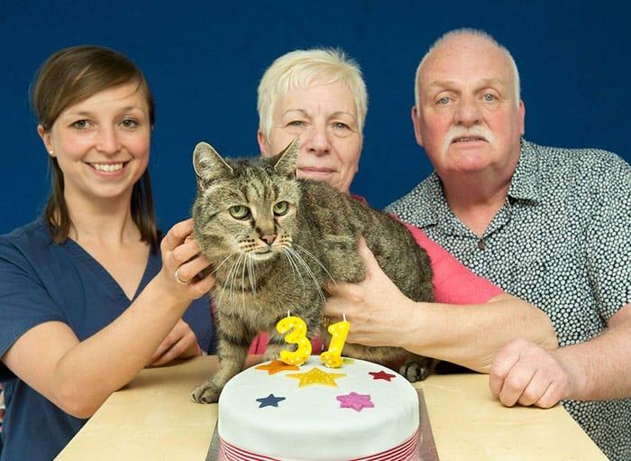 Кошка - любимица в семье