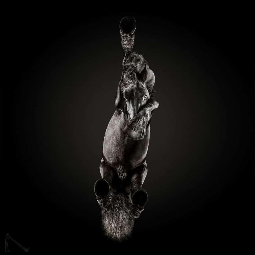 Лошадь с нового ракурса