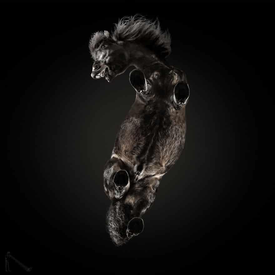 Необычные фото лошадей