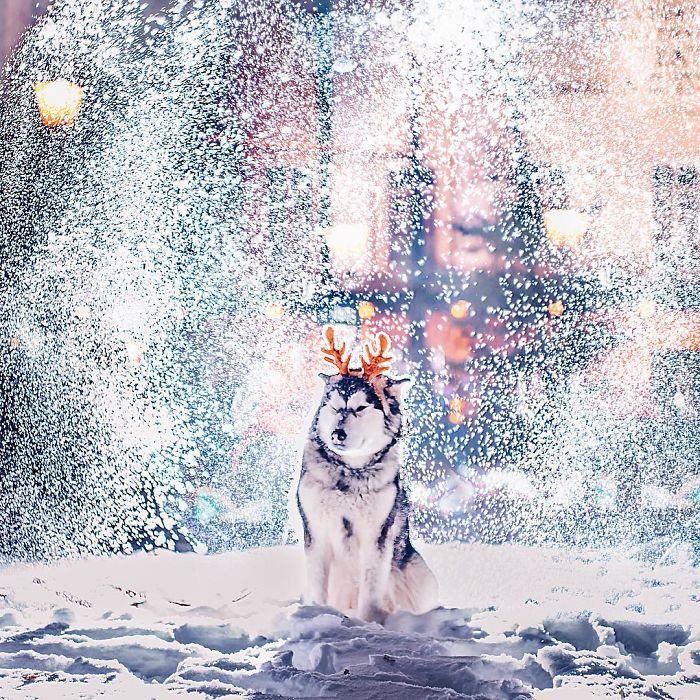 Серый волк на улице в Москве