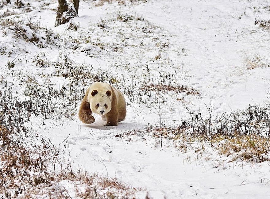 Медвежонок в заповеднике зимой