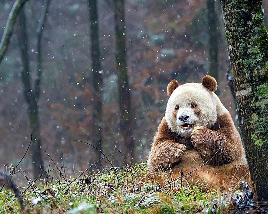 Одиночество всемирно известного животного