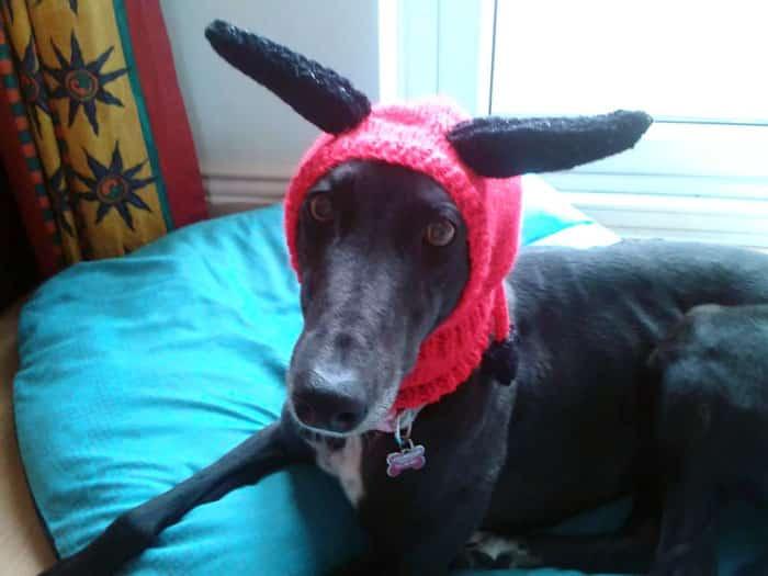 Вязанная шапочка для собаки