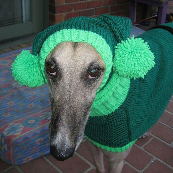 Собака в вязанной одежде