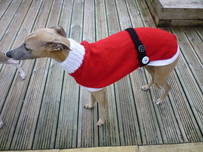 Собака в нарядном свитере