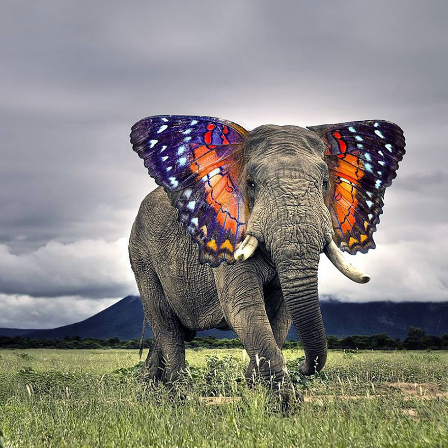 Слон с ушами бабочки
