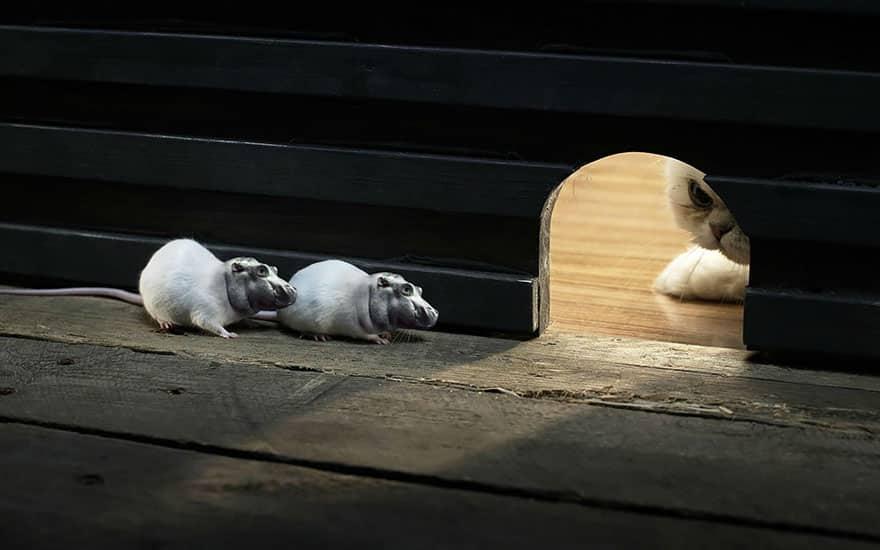 Мыши-бегемоты