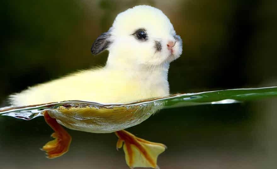 Утко-кролик