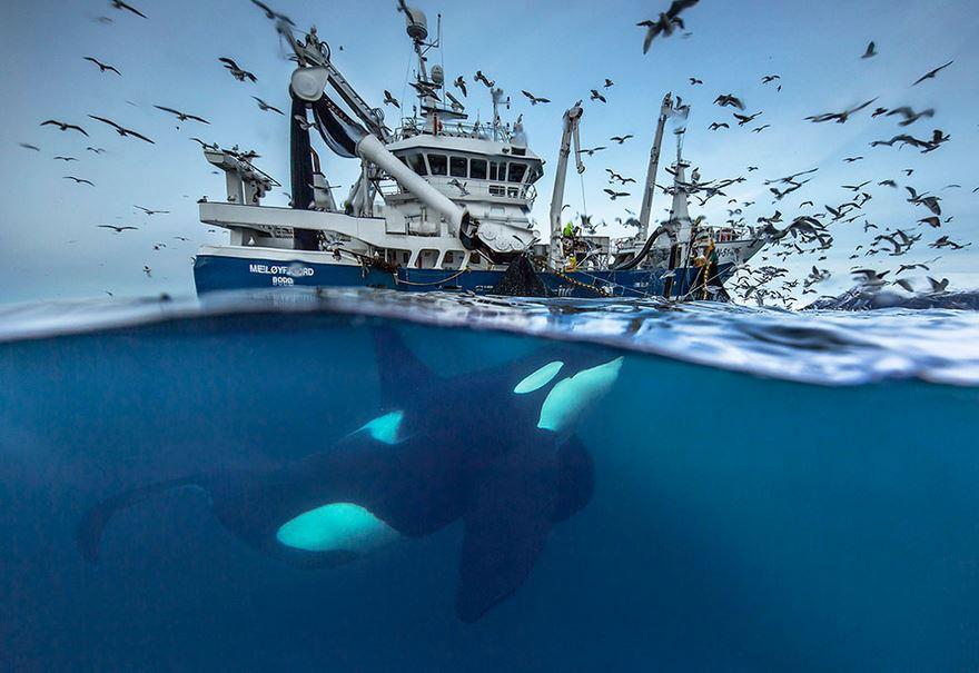 Научно-исследовательская морская экспедиция