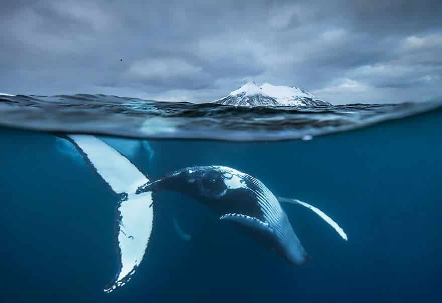 Подводная съемка китов