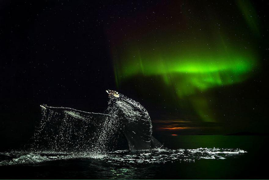 Северное сияние и морские гиганты