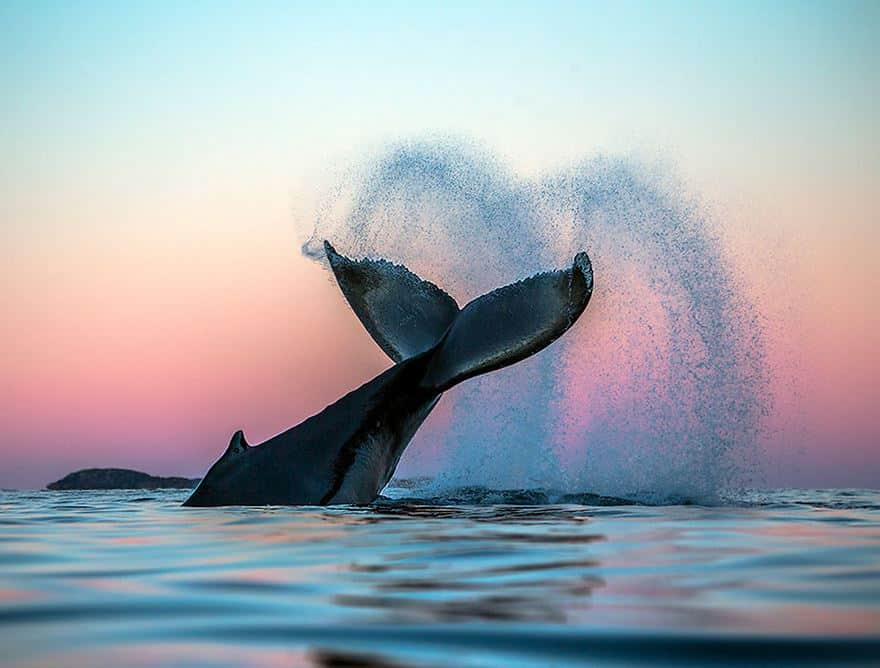 Старый знакомый кит