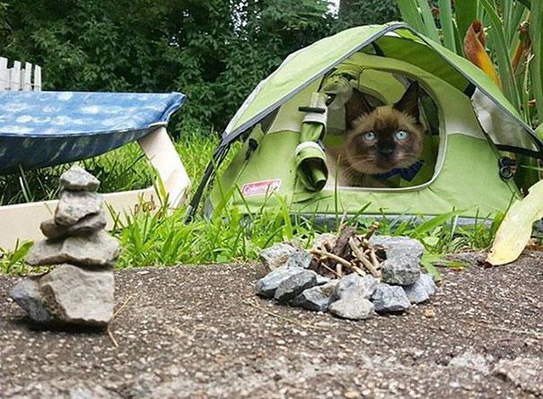 Кошка на привале