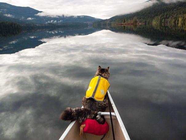 Путешествие кота в лодке