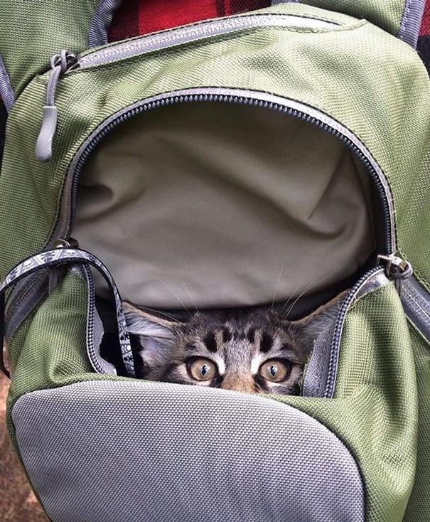 Кошка в рюказке