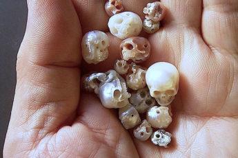Жменя черепов