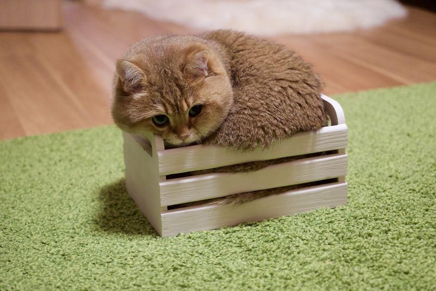 Настоящий кот в сапогах из Шрека