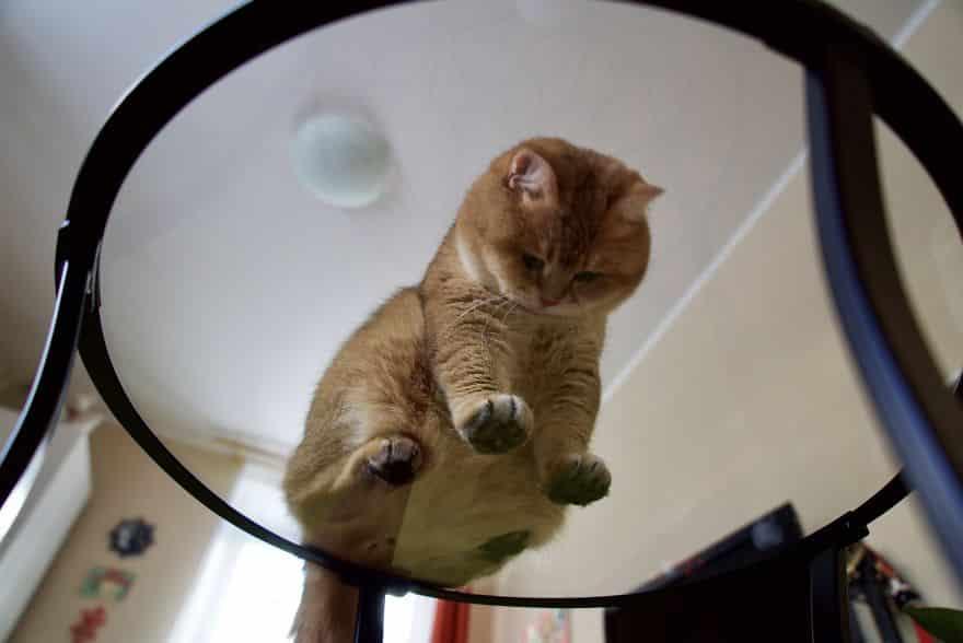 Пухлый кот