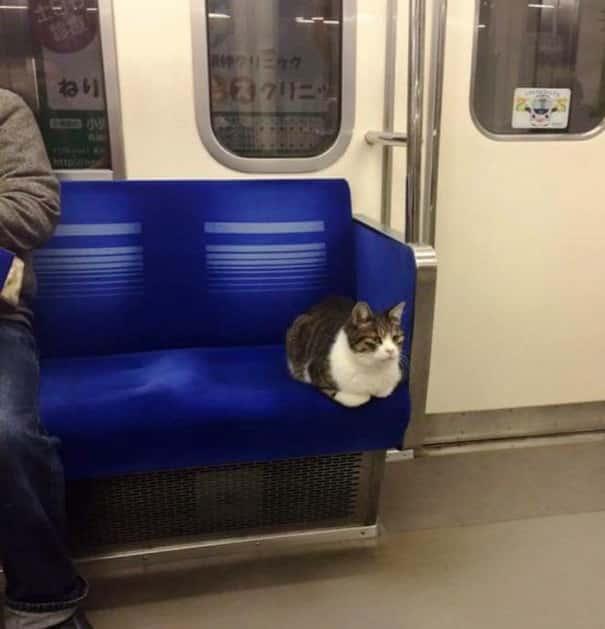Серый кот в метро Токио