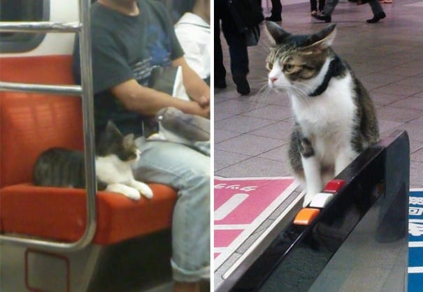 Кот проходит через турникет в метро
