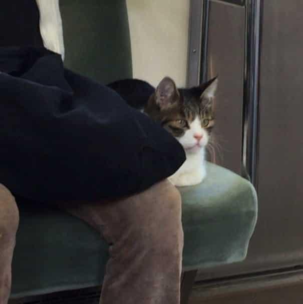 Кот в вагоне метро