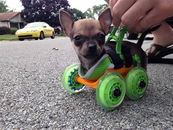 Мини-коляска для инвалида