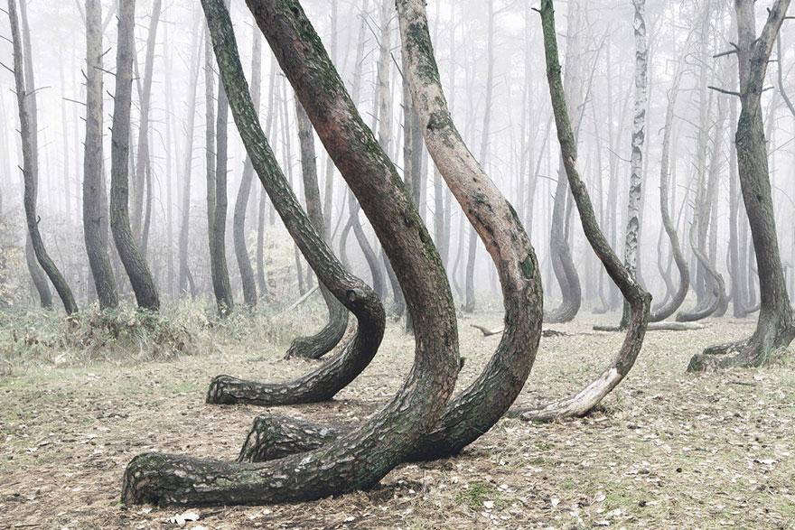 Загадочный лес в Польше