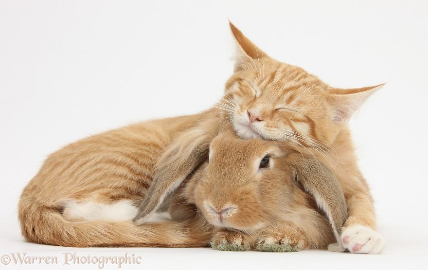 Кот и заяц - неразлучные друзья