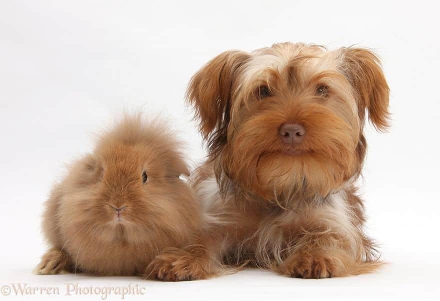 Волосатые побратимы - собака и кролик