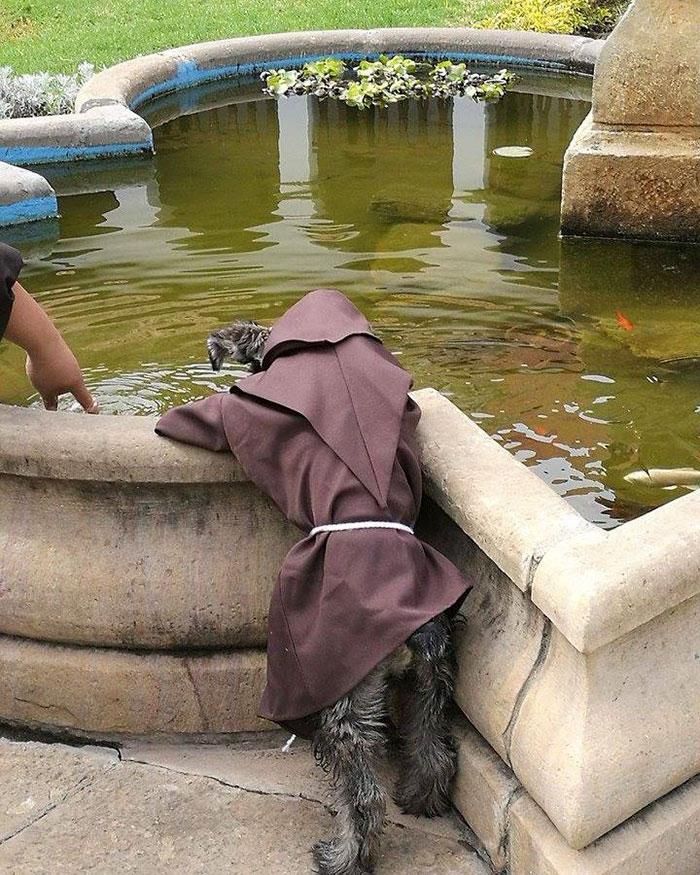 Забавная привычка нового монаха