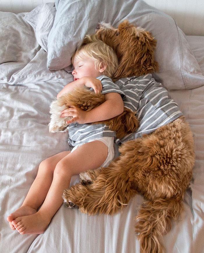 Собака охраняет сон мальчика