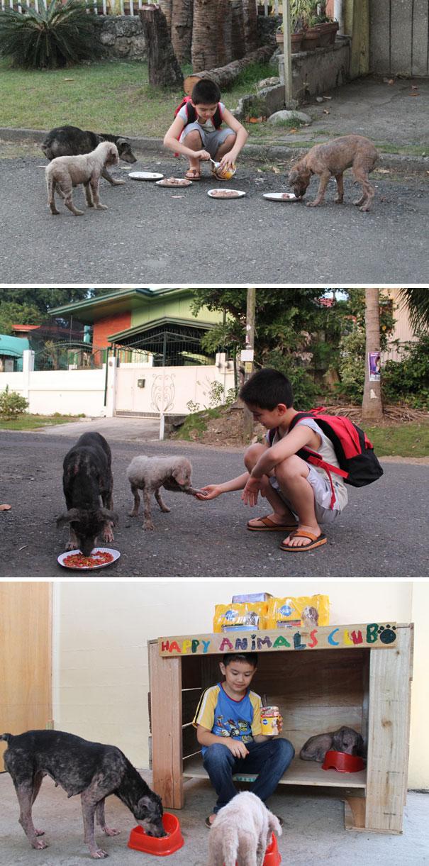 Мальчик заботится о бездомных животных