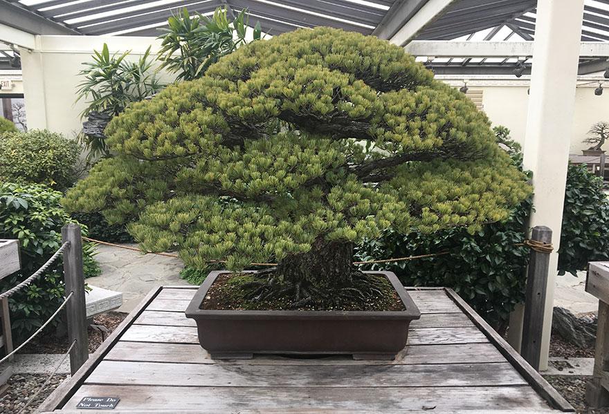 Дереву 400 лет