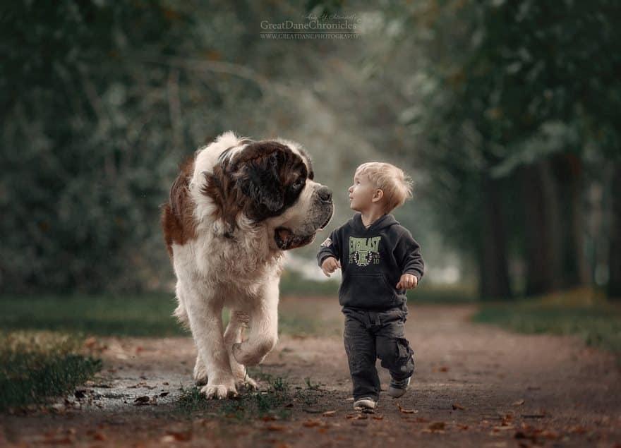 Огромный сенбернар и ребенок