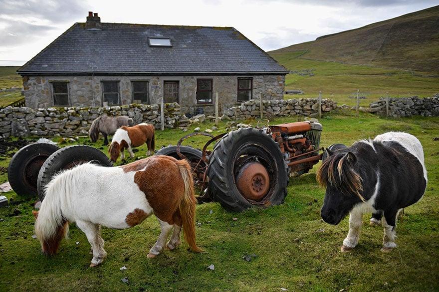 Зачем нужен трактор, когда вокруг лошади