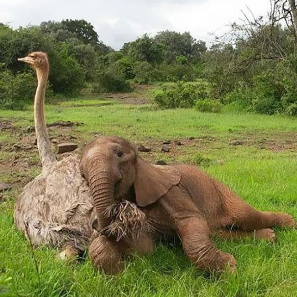 Страус и слоник
