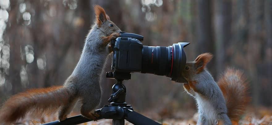 Белки изучают фотокамеру