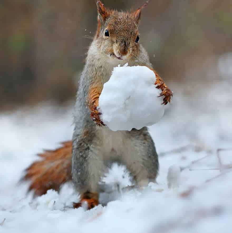 Белка со снежком