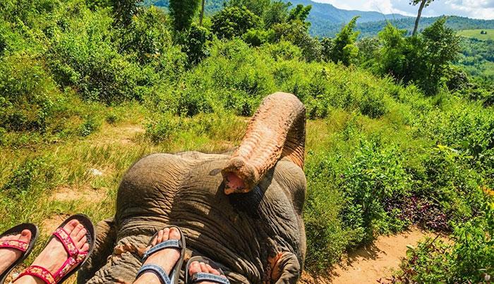 Спасите слонов