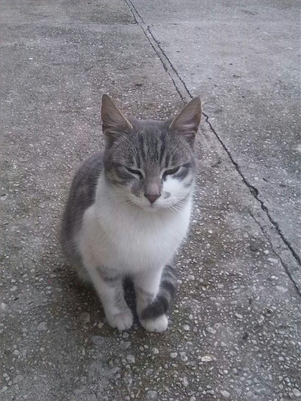 Ужаленная кошка