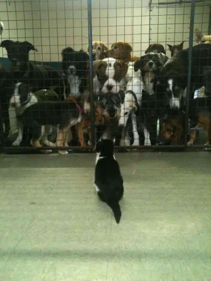 Издевательство над собаками