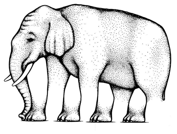 Этот «многоногий» слон