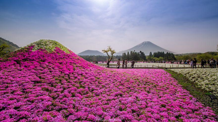 Потрясающие поля в Японии