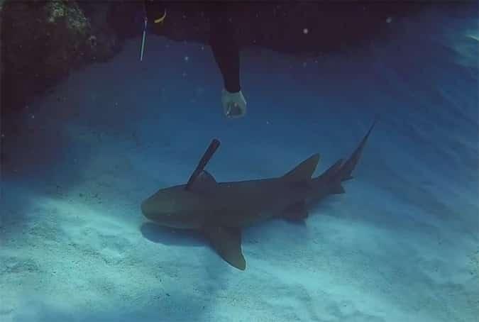 Акула с ножом в спине