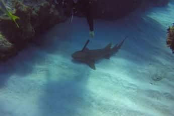 Раненая акула
