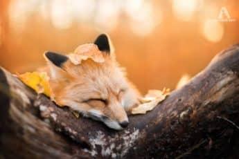 Осень и лиса