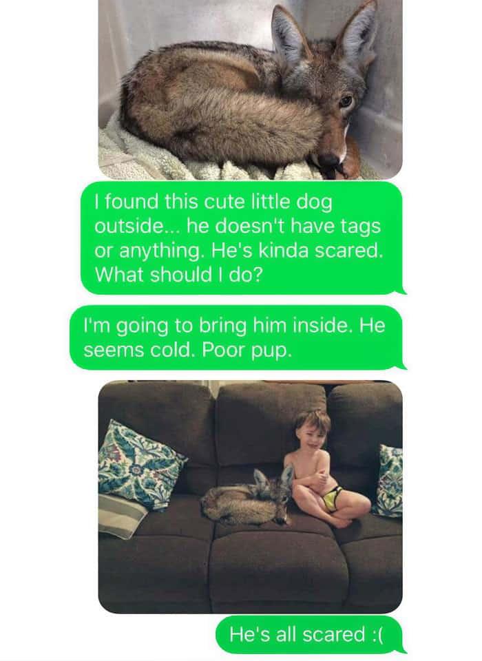 Хищный щенок