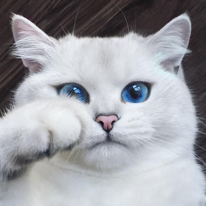 Коби, голубоглазый красавец